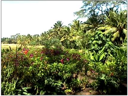 westis-herb-garden